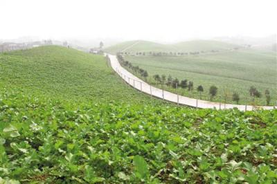 调整农业产业结构思路